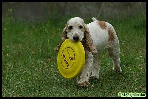 Sunday z frisbee